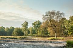 Summer drought (Hamert, the Netherlands) (Renate van den Boom) Tags: 08augustus 2018 boom bos europa hamert jaar landschap limburg maand maasduinen natuur nederland renatevandenboom ven