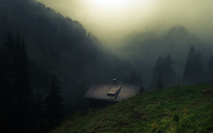 In the Alps (Netsrak) Tags: at alpen alps baum berg bäume eu europa europe landschaft natur nebel wald fog landscape mist mountain nature woods
