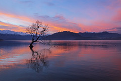 Wanaka Tree (Matt Champlin) Tags: tbt throwback newzealand wanaka tree lake mountains amazing travel hike hiking adventure friends fun life nature landscape peace peaceful evening sunset awesome canon 2018 water reflections sky clouds