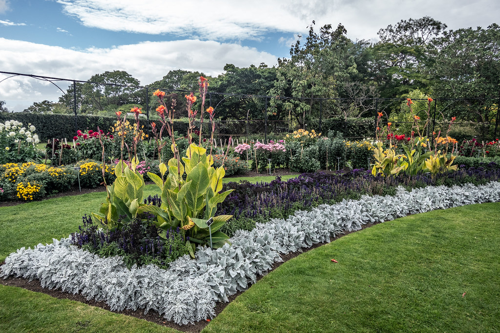 TUESDAY AFTERNOON AT THE BOTANIC GARDENS [IMAGES AT RANDOM USING A SONY RX0]-144676