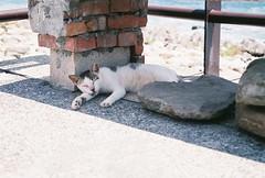 (YL.H) Tags: canon 500n hillvale taiwan cat film analog 宜蘭 底片 大溪漁港