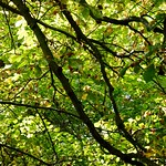 Branches and leaves thumbnail