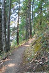 2018-08-18 Whistle Lake Trail 205 (21) (680x1024) (-jon) Tags: anacortes skagitcounty skagit fidalgoisland sanjuanislands washingtonstate washington pnw pacificnorthwest salishsea pugetsound acfl anacortescommunityforestlands whistlelake lake trail path 205 nikon nikonl22 tree douglasfir fern alder summer woods forest a266122photographyproduction hiking hike walk walking
