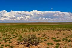 Mongolia in a day - greener (NettyA) Tags: asia mongolia barren clouds desert dry flat green landscape plants sand scrub