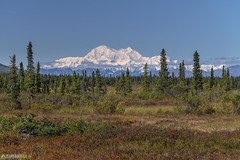 Denali - Alaska (Captures.ch) Tags: wolken sun clear clouds klar tag day morgen morning herbst foliage fall alaska denali denalihighway wald tree sky mountains landschaft landscape himmel hill hügel forest glacier gletscher berge baum aufnahme capture