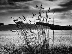 rnor82275.jpg (Robert Norbury) Tags: fuckit somearelandscapessomearenot icantbearsedkeywording fineartphotography blackandwhite photographer itdoesntmatterwhattheyarepicturesoftheyarejustpictures itdoesntmatterwhattheyarepicturesoftheyarejustpictur