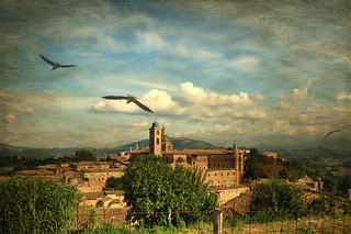 #Urbino