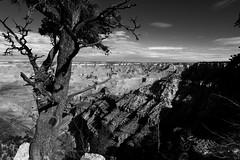 Grand Canyon, AZ, 2016 (Mr Bewlay (Hourtoulle)) Tags: usa etatsunis fujifilm xt10 noiretblanc blackandwhite grandcanyon