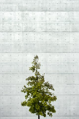 (LG_92) Tags: tree green concrete wall brutalism modern architecture abstract berlin germany deutschland 2018 nikon dslr d3100