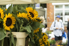 Sunflowers (jamiethompson01) Tags: columbia road market flower people workers street sunflowers rain sun bethnal green vinyl vintage zeiss 55mm 18f 2018 uk london fun united kingdom east end plants buy sell bank holiday weekend sunday groups trip chilli peppers bulbs