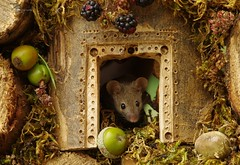 mouse (Simon Dell Photography) Tags: wild george log pile house mouse nature garden animal rodent cute fun funny summer fruits berries berrys display lots bounty moss covered simon dell photography sheffield 2018 aug cool awesome countryfile ears close up high detail cards design carved door frame way