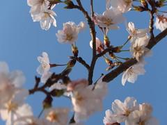 a (63) (hiromi89) Tags: japan beauty beautiful scenery flower wood pond