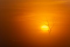 Heat (Licht und Korn) Tags: sonne hitze trockenheit sun sunrise sonnenaufgang baum tree lichtundkorn