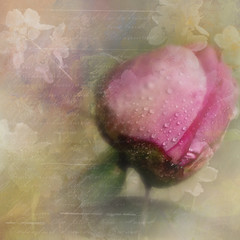 By a flower-By a letter- (BirgittaSjostedt- away for a while.) Tags: peony bud flower art nature texture unique fineart text poetry birgittasjostedt