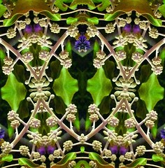Botanical Abstract 2 (Lindsaywhimsy) Tags: botanical abstract green leaves buds experimental