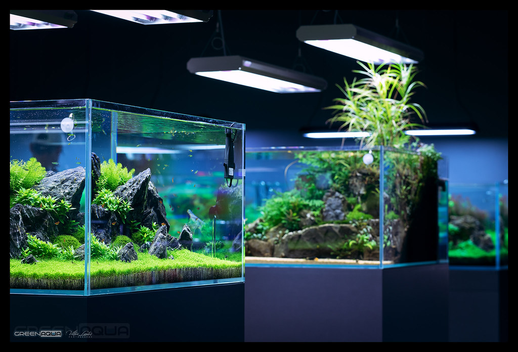 the world s newest photos of aquascape and greenaqua flickr hive mind