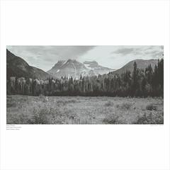 Beauty Displayed (greenschist) Tags: trees mountrobsonprovincialpark meadow 6x12 mountain canada glaciers britishcolumbia mountrobson snow