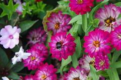 JLF19860 (jlfaurie) Tags: jardin hôteldeville evéché bourges jlfr mechas mpmdf lucila 21082018 flores garden flowers