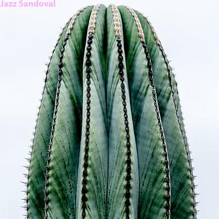 Cactus. 08. Jardín de cactus, Lanzarote, agosto 2018.