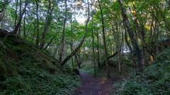 Robin Hood Quarry (Brian Negus) Tags: woodland trees goldenhour robinhoodquarry wallbridge quarry wood derbyshire dusk