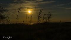 Sortida sol encanyiçar (jolispic) Tags: deltadelebre desembocaduradelriuebre sortidasol vacances2018