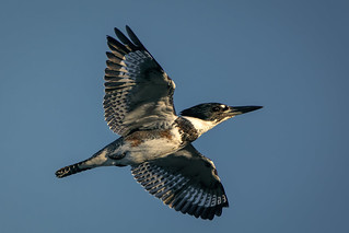 Kingfisher flyby