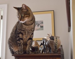 Cricket, a giant among animals (rootcrop54) Tags: cricket male mackerel tabby china cabinet collection animals castiron brass giant miniature neko macska kedi 猫 kočka kissa γάτα köttur kucing gatto 고양이 kaķis katė katt katze katzen kot кошка mačka gatos maček kitteh chat ネコ