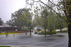 Flooding. (dccradio) Tags: lumberton nc northcarolina robesoncounty outdoor outdoors saturday evening latesummer earlyfall earlyautumn september tree trees foliage greenery leaf leaves treebranch branch branches treebranches parking parkinglot paved pavement flooding hurricane florence hurricaneflorence storm rain raining rainy flood floods weather weatherevent nature natural sky cloudy overcast lines paintedlines standingwater water bodyofwater floodwater nikon d40 dslr fallen fallentree downed downedtree