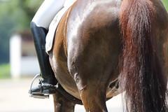 _MG_9448 (dreiwn) Tags: dressurprüfung dressurreiten dressurpferd ridingarena reitturnier reiten reitplatz reitverein reitsport ridingclub equestrian horse horseback horseriding horseshow pferdesport pferd pony pferde tamronsp70200f28divcusd dressur dressuur dressyr dressage