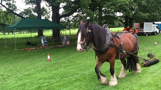 VIDEO = Woodmen with working horse in Towneley Park, Burnley