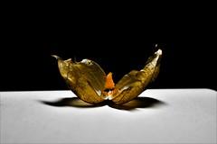 (AdrisXO) Tags: fragility still life fruit