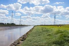 River Nene - Foul Anchor, Cambridgeshire, UK-3 (Nature21290) Tags: cambridgeshire foulanchor july2018 rivernene saltmarsh uk