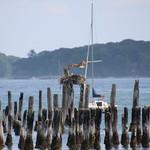Osprey Nest Near the Royal Caribbean Adventure of the Seas in Portland, Maine - July 29th, 2018 thumbnail