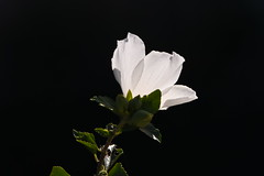 White lights,