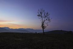 a tree stand alone (tanongsak.s) Tags: tree landscape sky sunrise sunset grass field mountains hill blue green yellow branch park misty