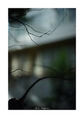 2018/8/24 - 5/12 photo by shin ikegami. - SONY ILCE‑7M2 / New Jupiter 3+ 1.5/50 L39/M (shin ikegami) Tags: 紅葉 silhouette シルエット sky 空 macro マクロ 井の頭公園 吉祥寺 summer 夏 sony ilce7m2 sonyilce7m2 a7ii 50mm lomography lomoartlens newjupiter3 tokyo sonycamera photo photographer 単焦点 iso800 ndfilter light shadow 自然 nature 玉ボケ bokeh depthoffield naturephotography art photography japan earth asia