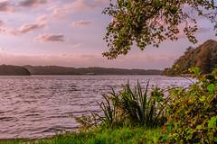 Danish Lake (ghismou1981bo) Tags: lake leaves clouds nuvole lago sky landscape denmark bjerringbro nikon 35mm primelens sunset sunsetlight sunclouds walkaround