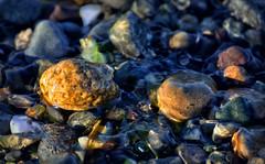 TEXTURE LYTLE BEACH WET ROCKS (Wolf Creek Carl) Tags: rocks water beach bainbrdigeisland texture nature washington lytlebeach outside ocean