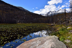 Cub Lake (MarkusR.) Tags: mrieder markusrieder nikon d7200 nikond7200 vacation urlaub fotoreise phototrip usa 2017 usa2017 colorado rockymountains rockymountainnationalpark landscape landschaft natur nature nationalpark hiking wandern hike trail wanderung cublaketrail cublake see lake