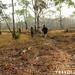 Semi dry forest around Thmat Boey