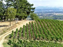 LE BOUTHERAN (Μonia) Tags: couleur nature vigne zuiko60mm em1