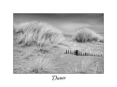 Dunes (<Derek>) Tags: dunes sanddunes infrared convertedcamera 720nm monochrome mono blackandwhite bw fence