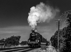 Steam in summer - 2 (Peter Leigh50) Tags: gcr great central railway br standard std 2mt 260 quorn steam sky locomotive sunshine summer sunlight train trees track telegraph pole mono monochrome blackandwhite