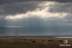 Ngorongoro Crater (www.jamesbrew.com) (James Brew (www.jamesbrew.com)) Tags: tanzania africa eastafrica travel travelphotography wildlife wildlifephotography landscape landscapephotography jamesbrew ngorongoro crater