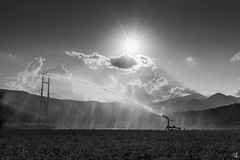 Watering clover (tzevang.com) Tags: clover mani peloponnese greece field watering agriculture sun clouds southern lakonia