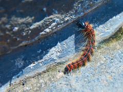 2018 Beijing - 司马台长城 (Si Ma Tai Great Wall) 031 (ArdieBeaPhotography) Tags: caterpillar hairy macro tall rugged mountains sky clouds high summer wall great simatai 司马台 长城 tourists walking