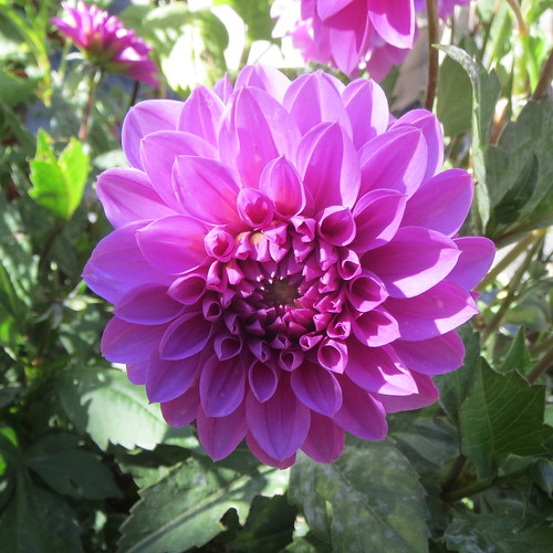 pink flower 9 8 18