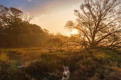 Zwischen Mulde und Elbe (Uwe Weigel) Tags: sunset nature color sky natur sonnenuntergang stimmung landscape sea landscapephotography landschaftsfotografie pic nice forest wald germany europe mulde elbe