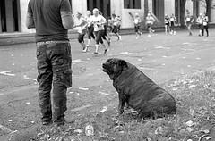 Cardiff 10K (The Unfortunate Whale) Tags: film filmphotography ilford ilfordhp5 hp5 harmantechnology southwales negativefilm blackandwhite bw blackandwhitefilm cardiff olympus om om1n olympuszuiko 50mm 50mmf14 zuiko50mm zuiko zuiko50mmf14 zuiko50mmf14mc yellowfilter xtol xtol11 epson epsonv550 scan street streetphotography wales cardiff10k dog