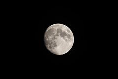 Dear Moon (JeffMoreau) Tags: sony moon a6300 dearmoon earth spacex 300mm elon musk yusaku maezawa lunar bfr